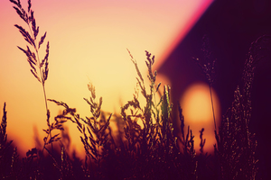 Plants Blurred Silhouette Sunset 4k Wallpaper