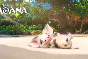 Pua Moana 4k Wallpaper
