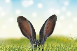 Rabbit Ears In The Grass 5k