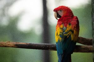 Red Blue And Yellow Macaw Bird 5k Wallpaper