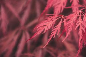 Red Leaf Macro 4k Wallpaper