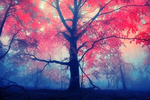 Red Leaves Tree Wallpaper