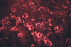 Red Tree Flowers 5k Wallpaper