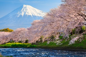 Sakura River japan Wallpaper