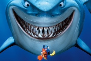 Shark Finding Nemo Wallpaper