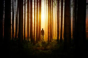 Silhouette Of A Man In Woods Covered By Tress Sunbeams Wallpaper