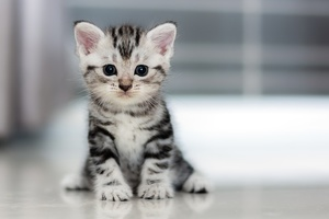 Small Kitten Wallpaper