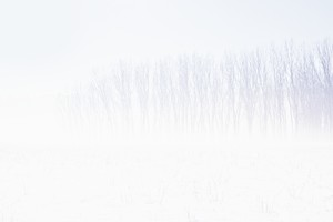 Snow Trees Abstract