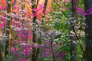 Spring Forest Trees Wallpaper