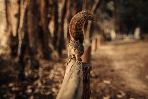 Squirrel Walking On Fence 5k Wallpaper