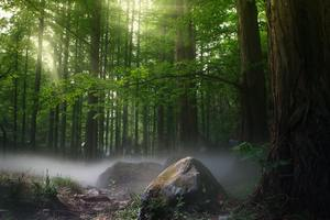 Sunbeams Forest Daylight Covered By Trees Wallpaper