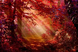 Sunlight In Autumn Forest Wallpaper