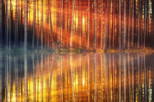 Sunset Day Light Lake Forest 4k Wallpaper