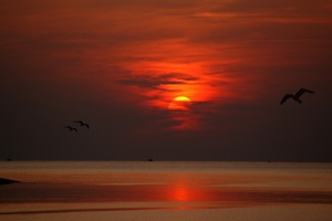Sunset Dusk Dawn Evening Sun Birds Flying Wallpaper