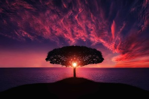 Sunset Tree Red Ocean Sky Wallpaper