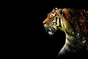 Tiger Abstract 5k Wallpaper