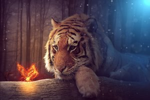 Tiger Dreamy Art
