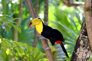 Toucan Bird Forest
