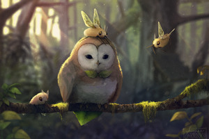 Tranquil Owl