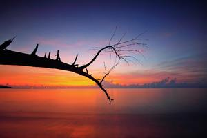 Tree Branch Sunset View Wallpaper