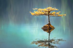 Tree In The Middle Of Lake Wallpaper