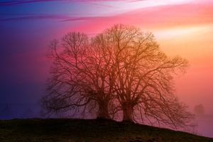 Tree Sunset Dawn 5k Wallpaper