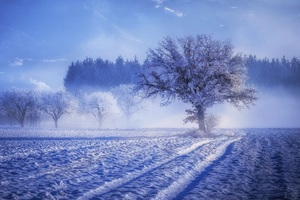 Trees Covered With Snow Fog Landscape Winter 4k Wallpaper