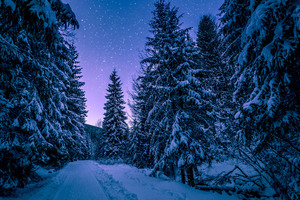 Trees Covered With Snow Freezing Forest Winter 5k Wallpaper