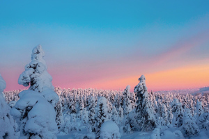 Trees Covered With Snow View Wallpaper