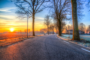 Trees On Road Both Side Morning Outdoors Nature 5k Wallpaper