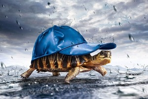 Turtle With Cap Raining Wallpaper