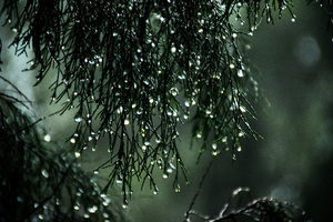 Wet Leaves Raindrops Nature Wallpaper