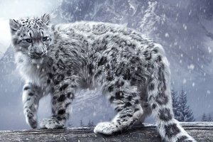White Leopard Hd
