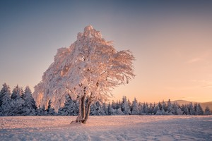 Winter Snow Trees