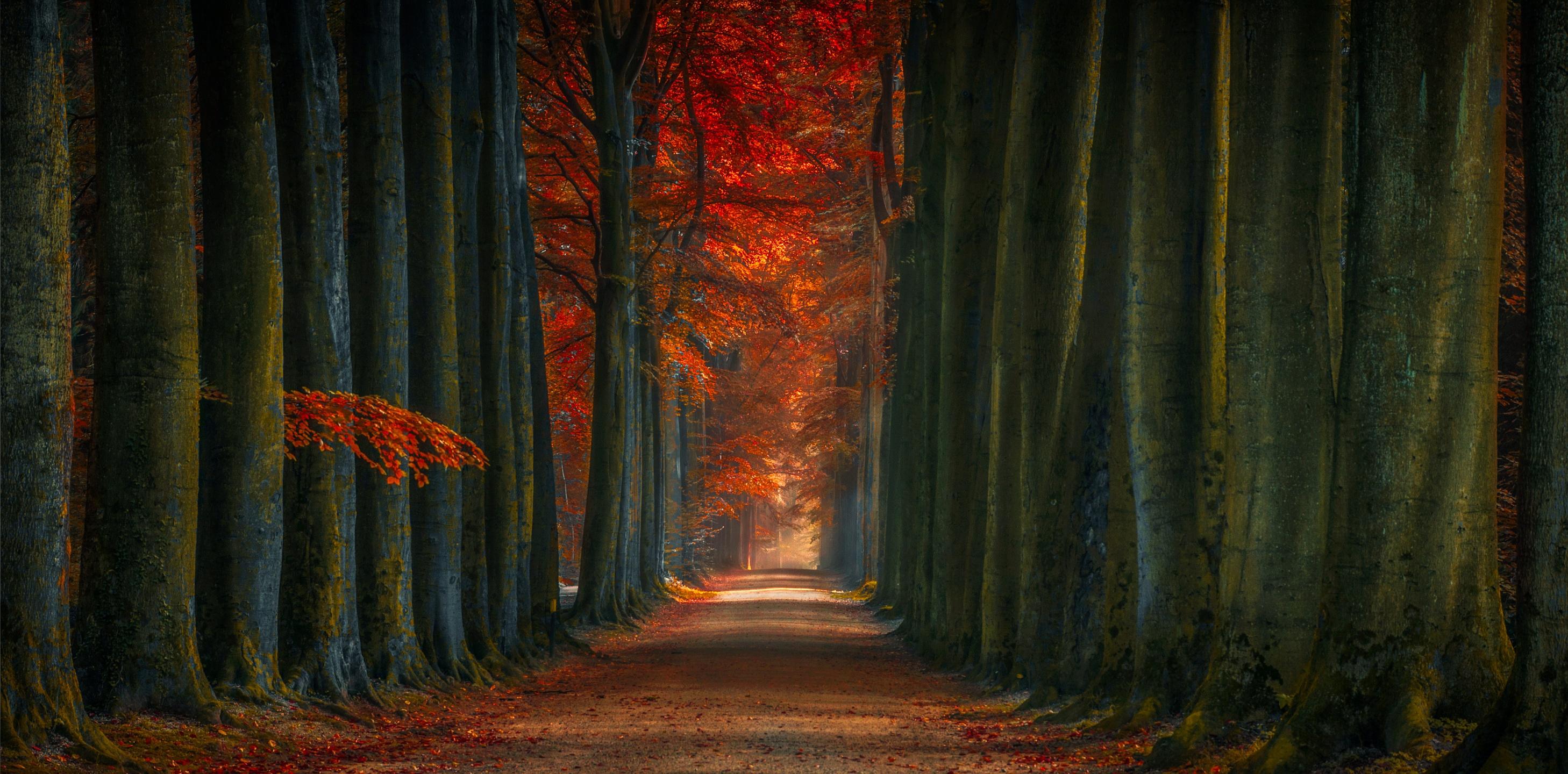 Tree lined winter fall alone road hd nature 4k - Nature ka wallpaper ...
