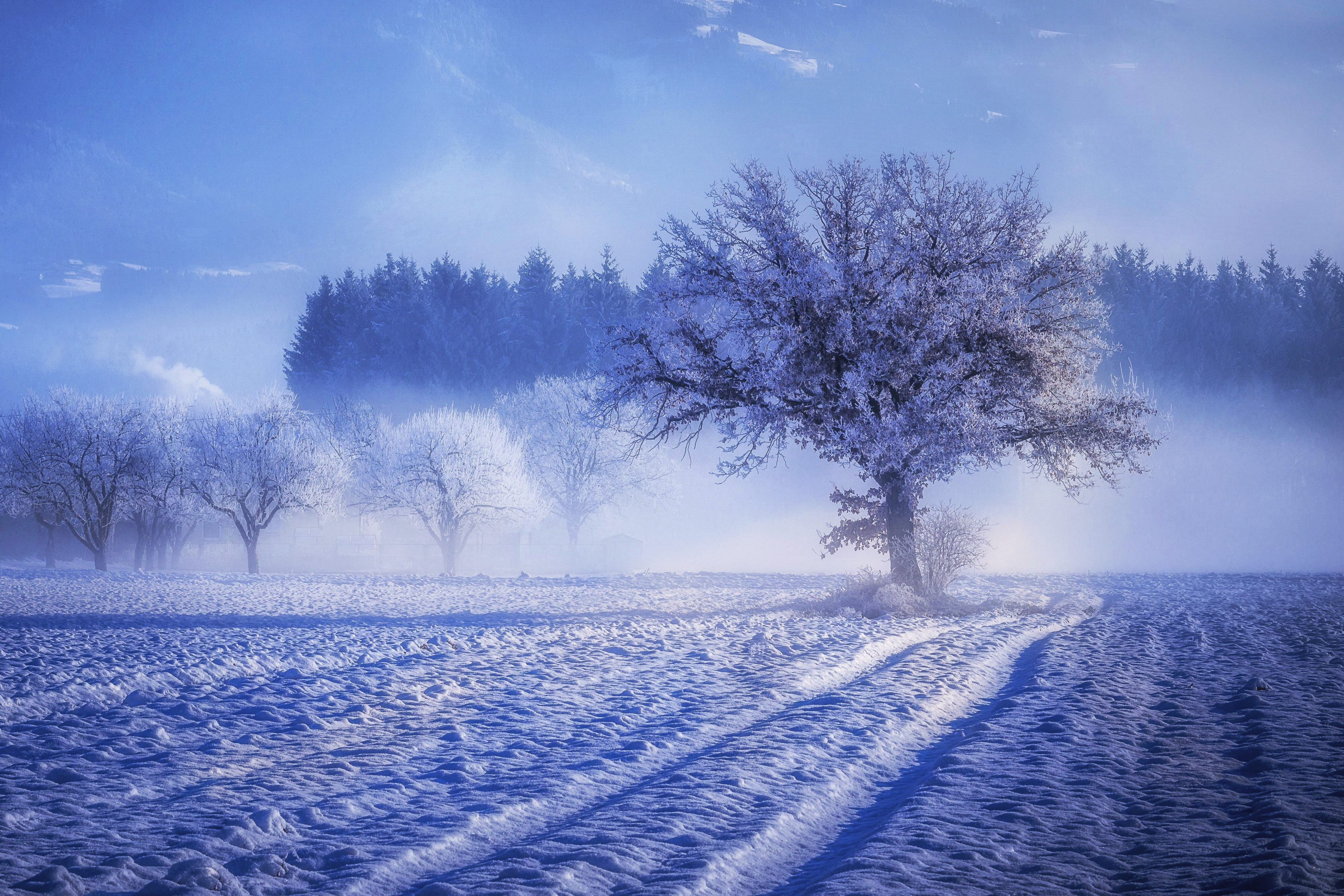 4k Nature Wallpaper Winter France: 1920x1080 Trees Covered With Snow Fog Landscape Winter 4k