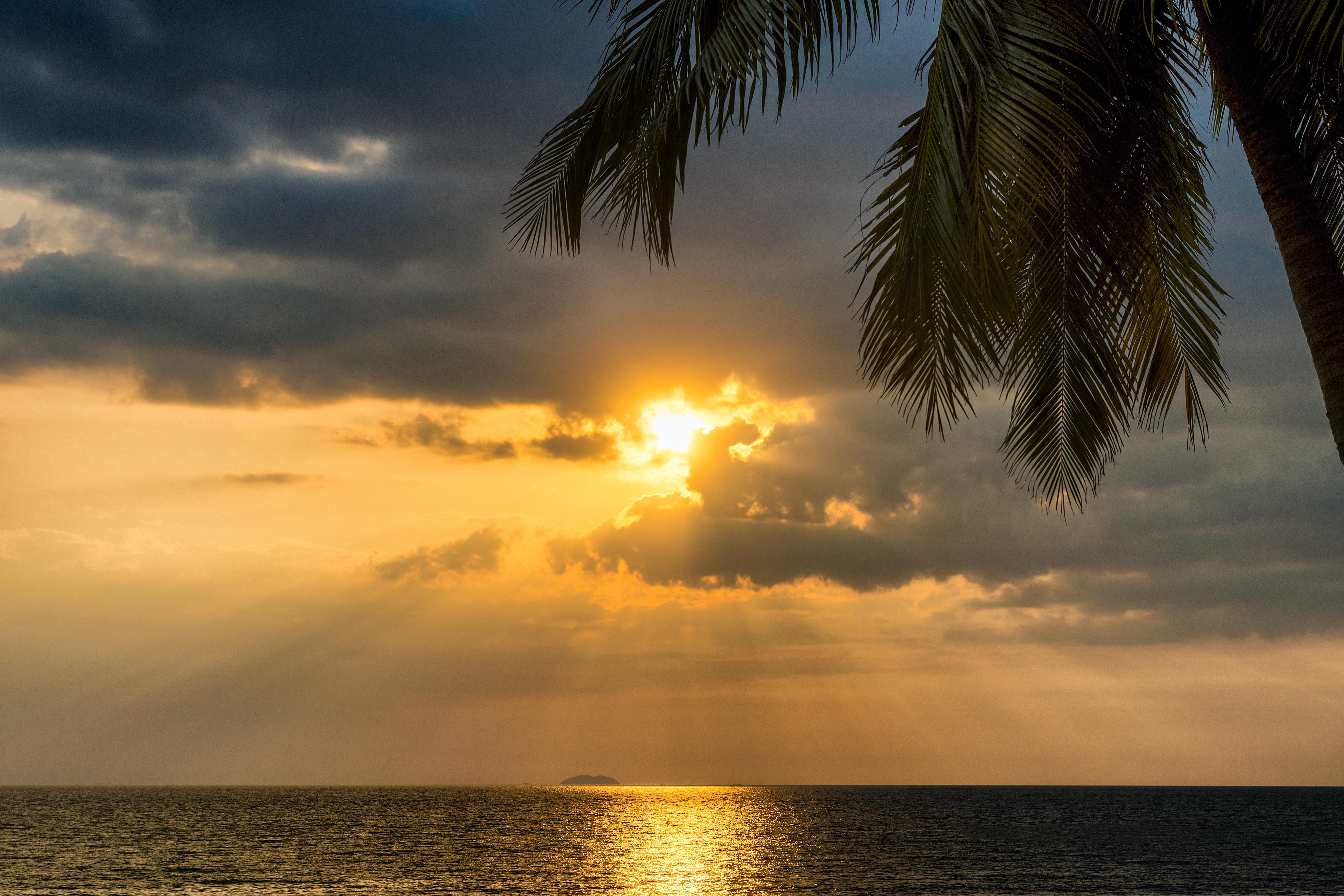 Tropics Palm Trees Sun Beach 4k Hd Desktop Wallpaper For: 3840x2160 Tropical Palm Tree Beside Sunset Ocean 5k 4k HD
