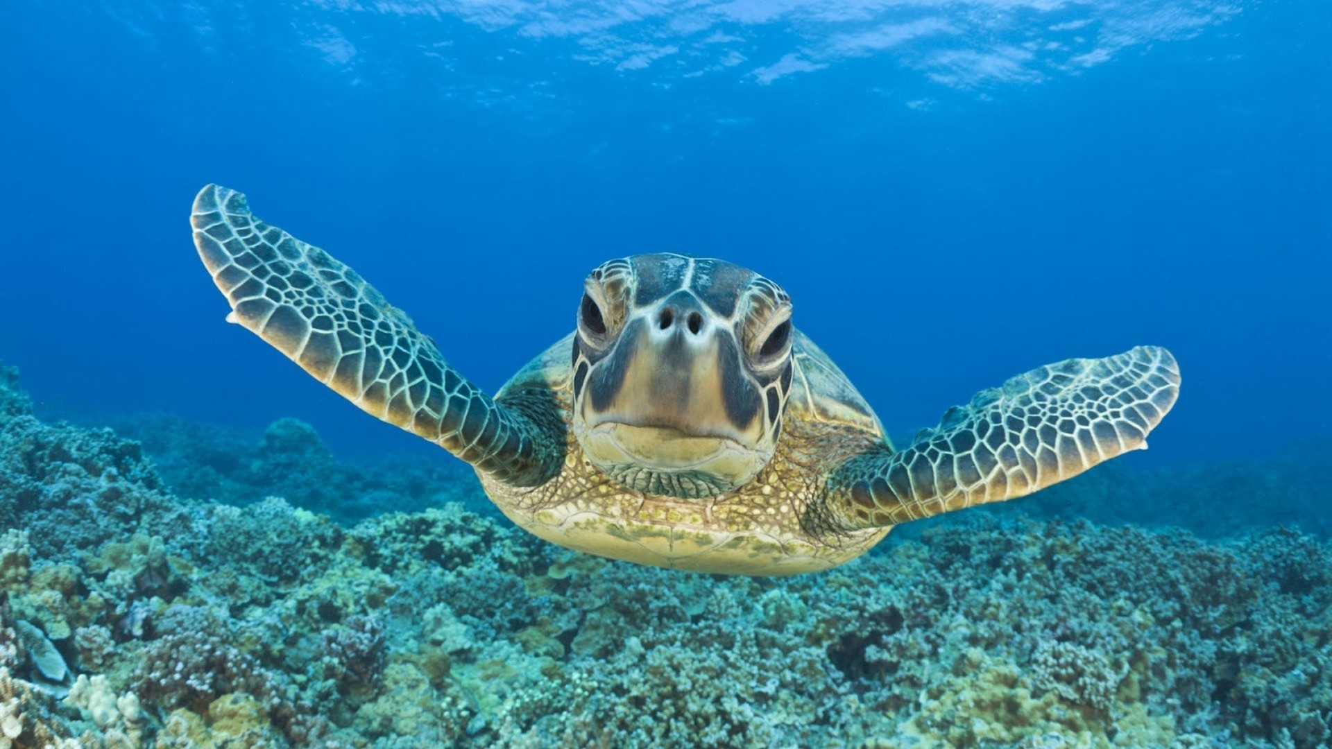 Turtle HD Animals 4k Wallpapers Images Backgrounds Photos And