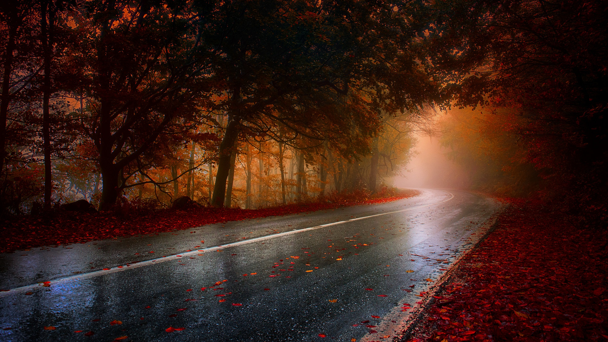 Wet rainy road leaf fallen hd hd nature 4k wallpapers images backgrounds photos and pictures - Rainy hd wallpaper for pc ...