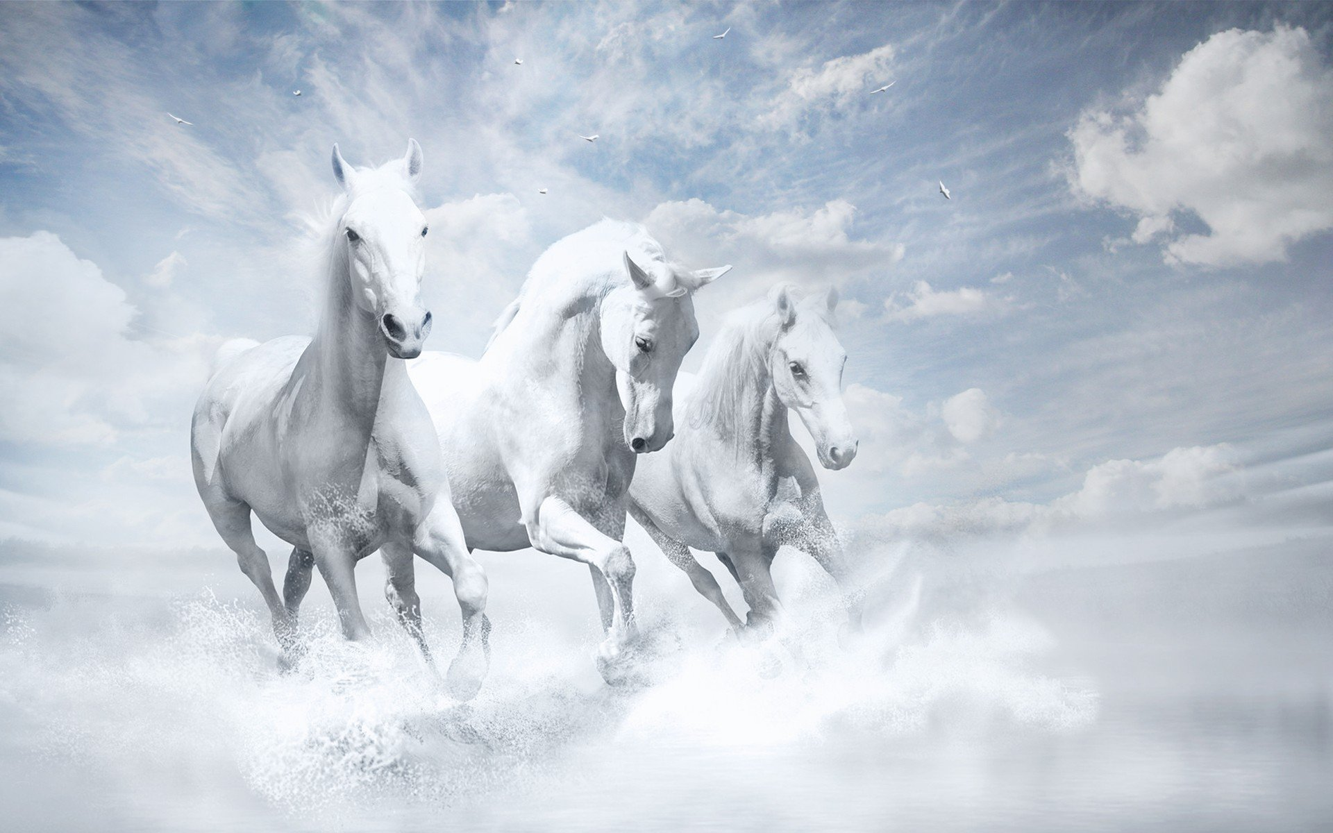 2048x1152 white horses hd 2048x1152 resolution hd 4k wallpapers white horses hd 2048x1152 resolution altavistaventures Gallery