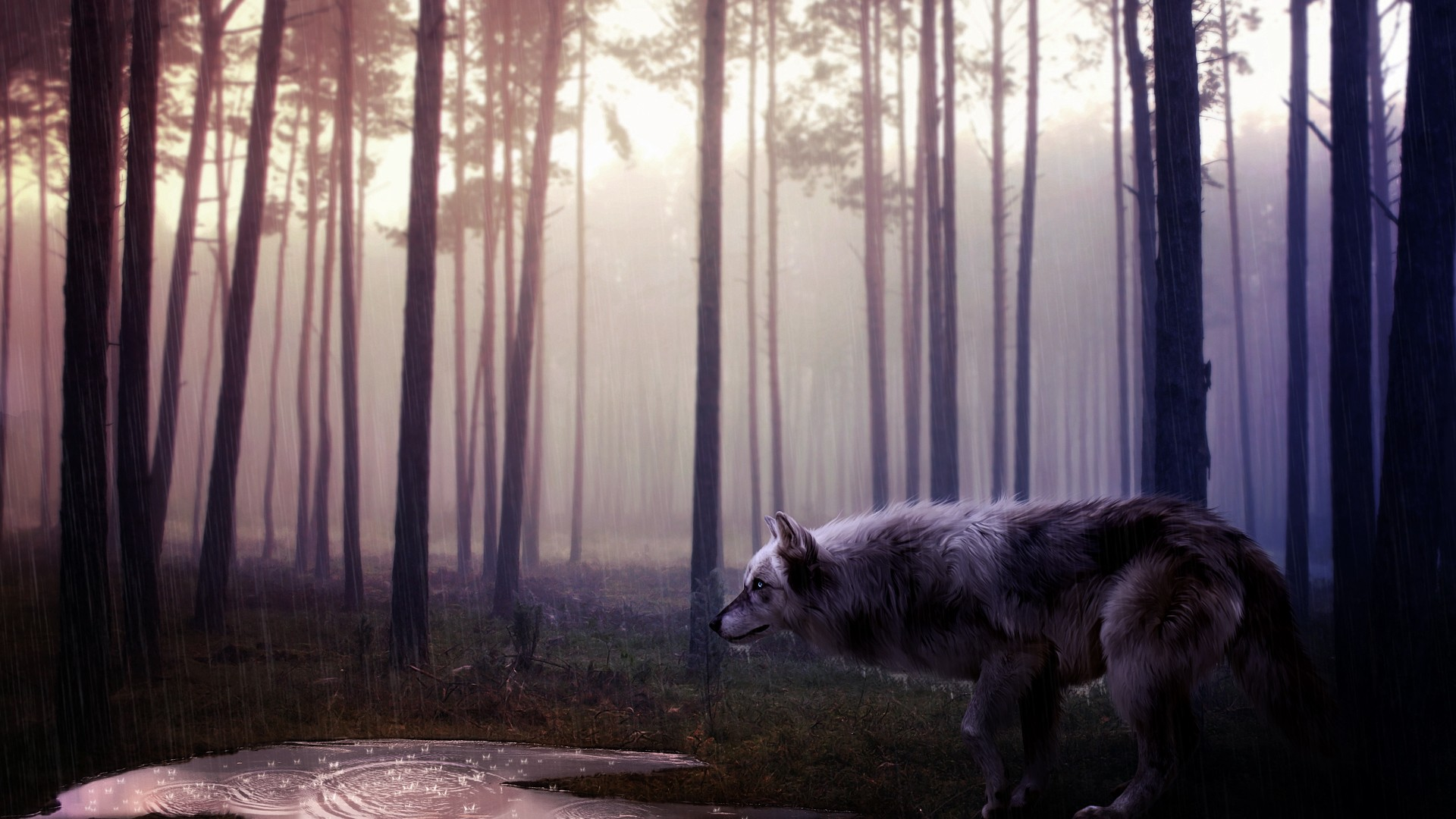 Wild Animal Wolf Wallpapers Hd 51074 Wallpaper: Wild Wolf, HD Animals, 4k Wallpapers, Images, Backgrounds