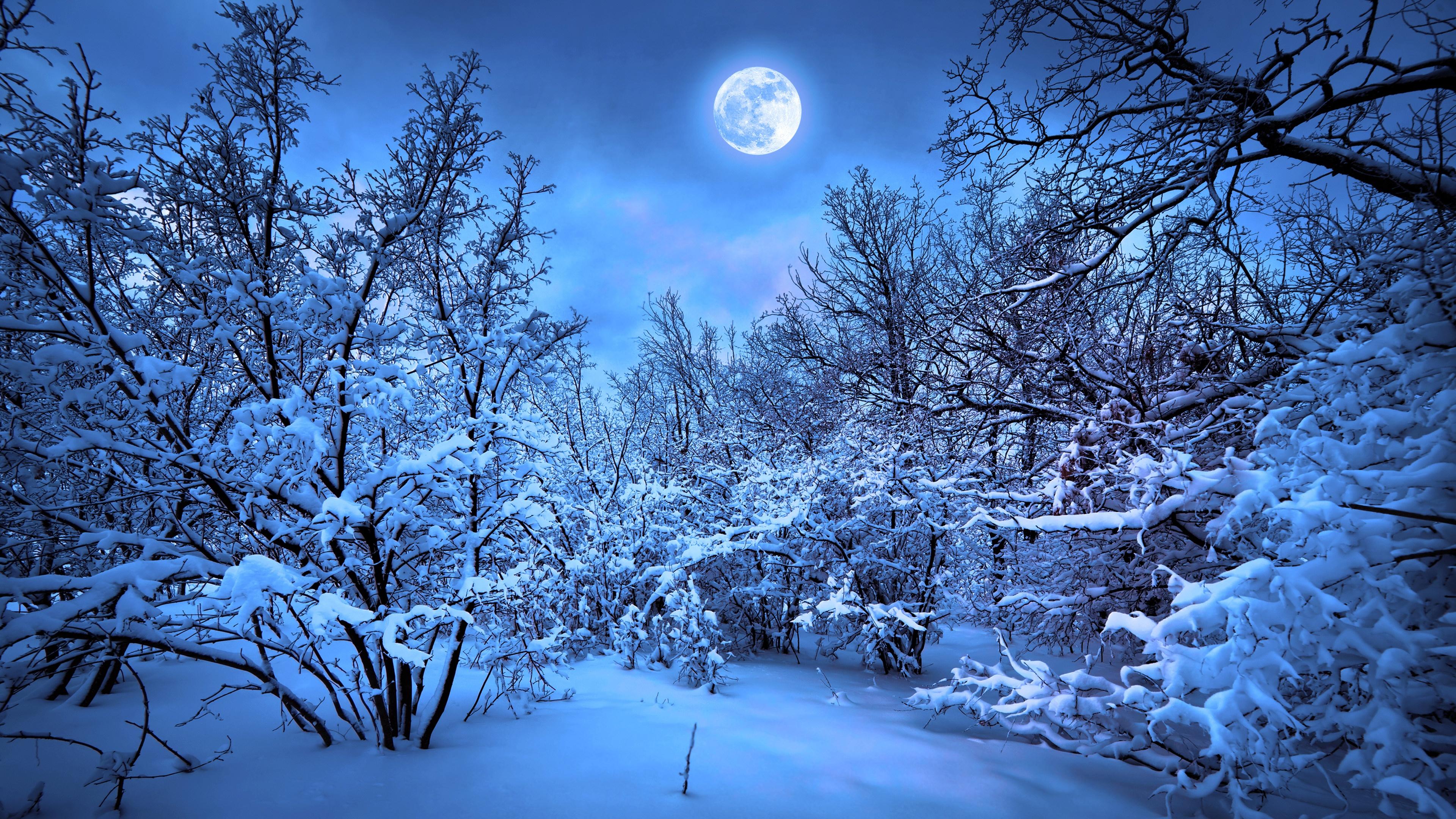 Winter Snow Nature 4k