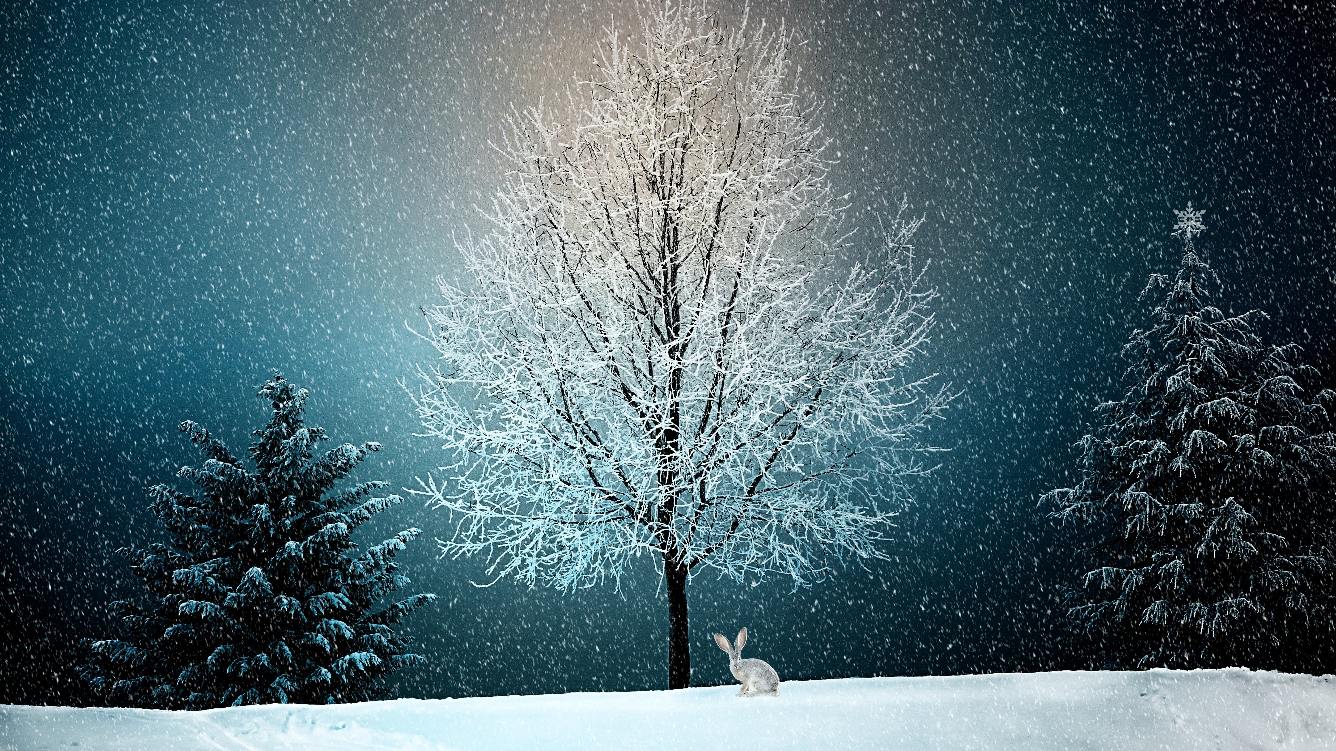 Winter Snow Tree 5k Hd Nature 4k Wallpapers Images