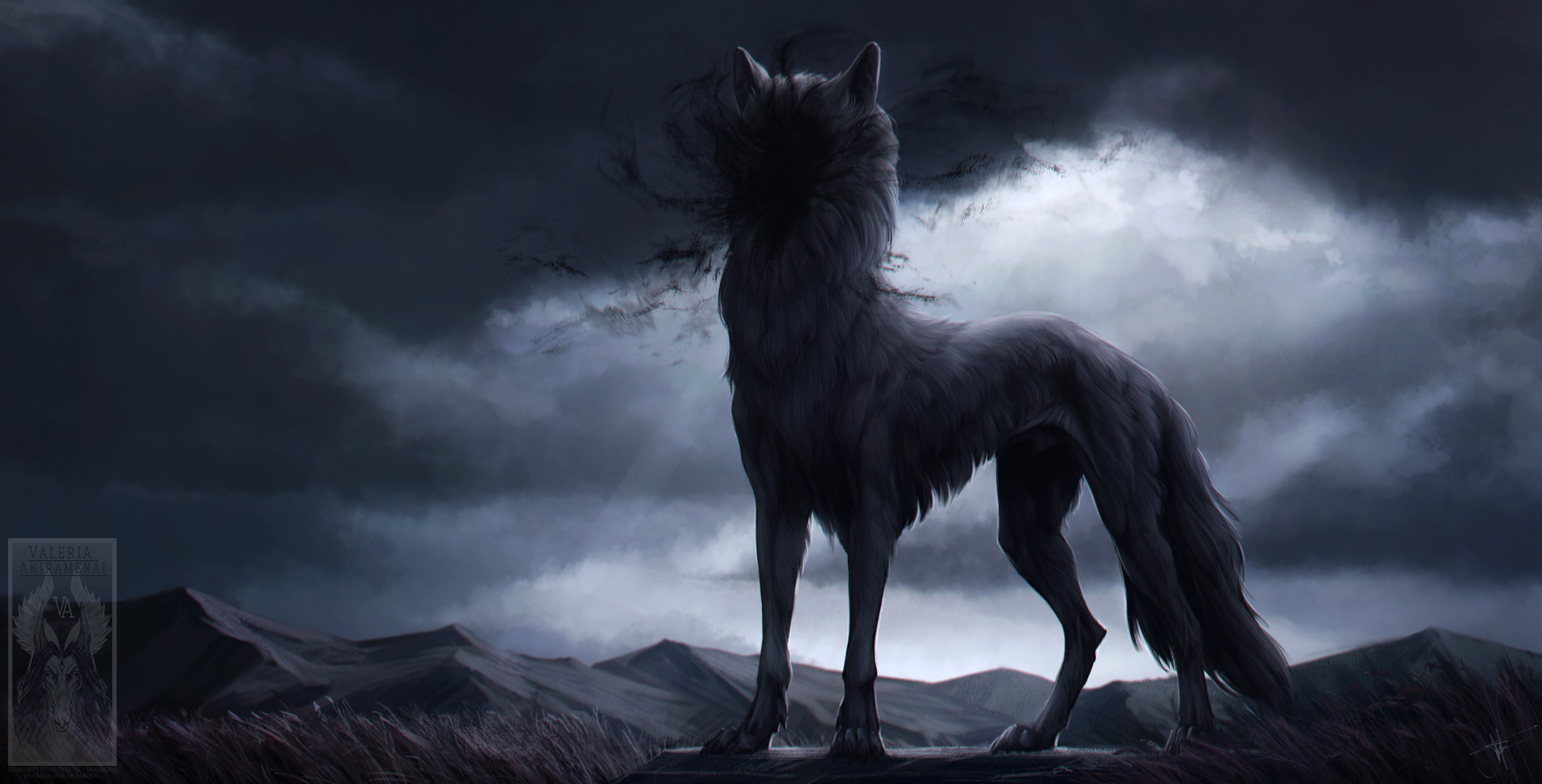 Wolf In Shadow 4k Hd Artist 4k Wallpapers Images