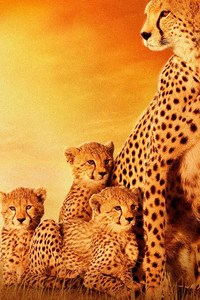 480x854 African Cats