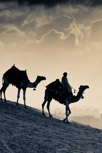 480x854 Arab People Camels
