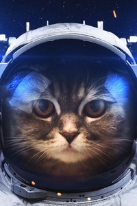240x400 Astronaut Cat