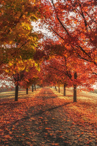 480x854 Autumn Fall Season Trees 4k