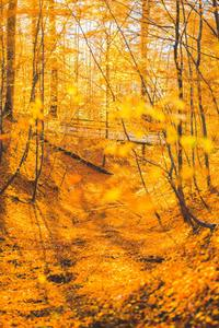 Autumn Forest Trees 5k