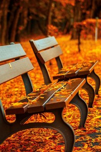Autumn Leaves Bench